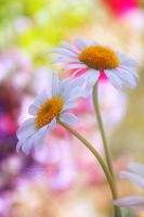 wake up and smell the flowers by ivadesign