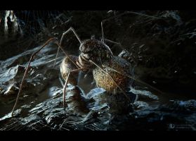 spider egg by ourlak