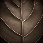 A Leaf by HolgaVision