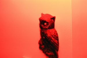 red owl by lonely-heart5