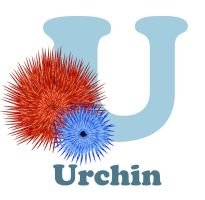 U is for Urchin by RSImpey