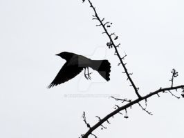 Take Flight Black Bird by kukikid