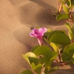 Pink flower by noly013