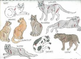 Members of ThunderClan 3-takhi by StarClan