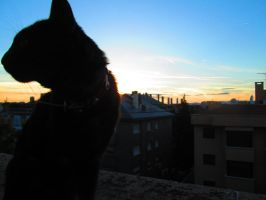 silhouette's cat -2 by AnnarXy