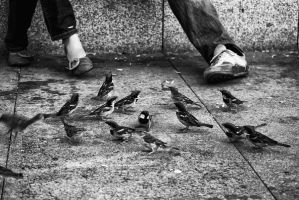 human and  Birds by ozycan