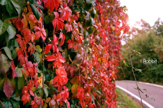 Red Leaves by ElettraGemma