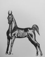 Saddlebred yearling by Comix-Chick