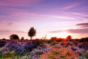 Dunwich Heath Tight Crop by Wayne4585