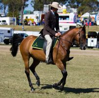 STOCK - Gold Coast show 130 by fillyrox