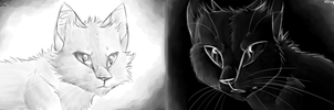 Opposites attract by Finchwing