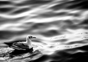 Seagull by LENA3689