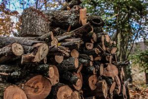 Wood Pile by gperkins10