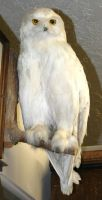 MoA Museum 128 Owl by Falln-Stock