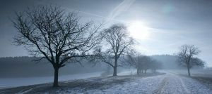Winter Morning by kkeman