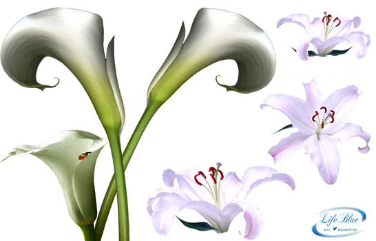 Lilies - PNG by lifeblue