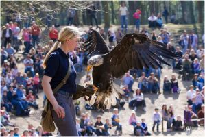 2010-206 Falconer at Work by W0LLE