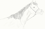 Horse sketch :P by Chantill