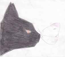 cat and butterfly by MEGANS64