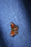 Butterfly by AndySimmons