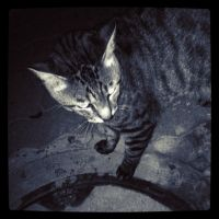 Kitty cat black and white by Vince-Zombie