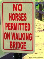 No Trotting Allowed by GlassHouse-1