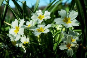 Under the Daffs by EarthHart