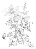 Clematis and Mouse by ursulav