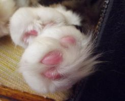 Pink Toes by curiouscarrie