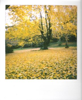 yellow.tree by Gwirrel