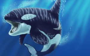 Orca Whale by equusamor