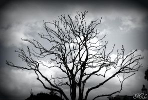 Lonely Tree by Poet515