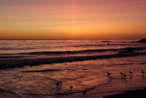 Sunset and Sandpipers by papatheo