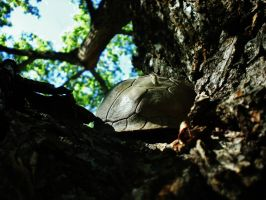 Turtle in a Tree by ArielOlivia