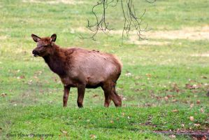 Elk County 11/2013 Part 3 by GlassHouse-1