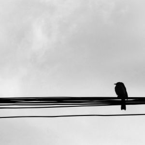 Bird in the Wire by Musashigyo