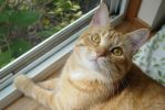 Lucy! Are you ever going to get out of that window by lucytherescuedcat