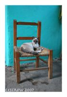 Cat in chair by cescrow