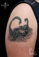 Fighting Scorpions by Anderstattoo