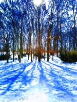 Winterspaziergang by teetotally