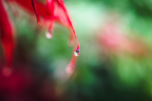 The World in a droplet by FrankT