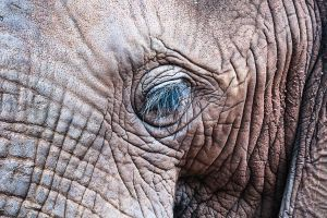 The Elephant Sanctuary 02 by RichardGeorgeDavis