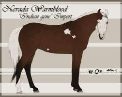 Nevada Wamrblood indian gene Import 07 by BRls-love-is-MY-Live
