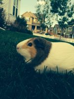 Pig in the grass by Griffinlover9785