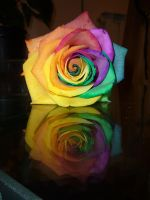 La rosa indecisa by theSeth