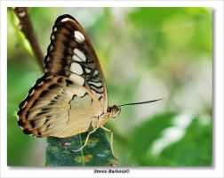 Butterfly XXI by ScoobyUSA