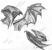 Dragon WIng Study by HalliaH1989