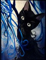 Black kitty blue strings by Fire-Redhead