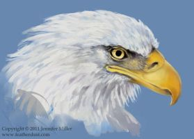 Decorah Eagle Sketch by Nambroth