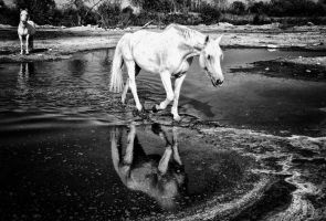 Camargue Horses 01 by cahilus